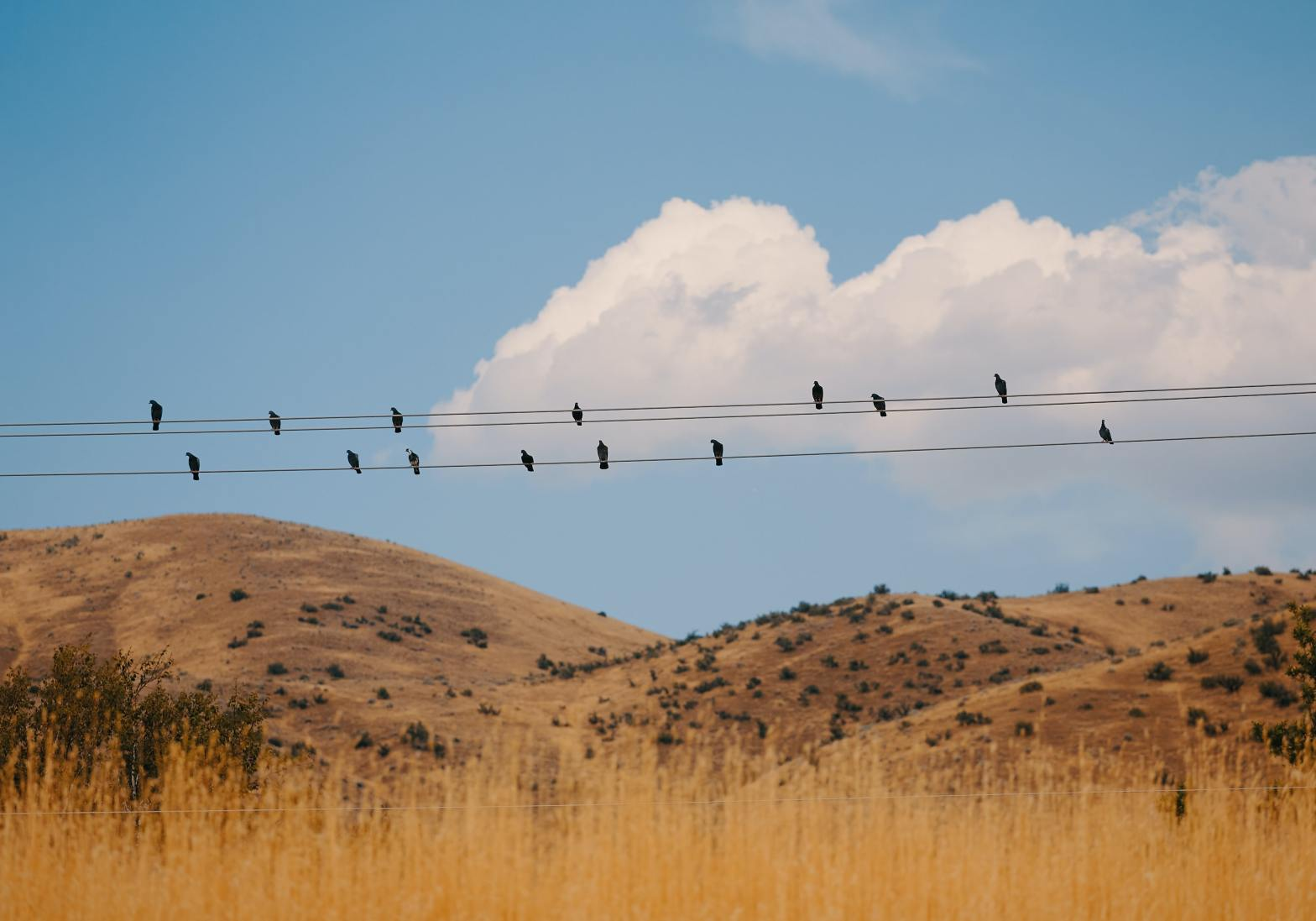 Birds on power lines with foothills in background